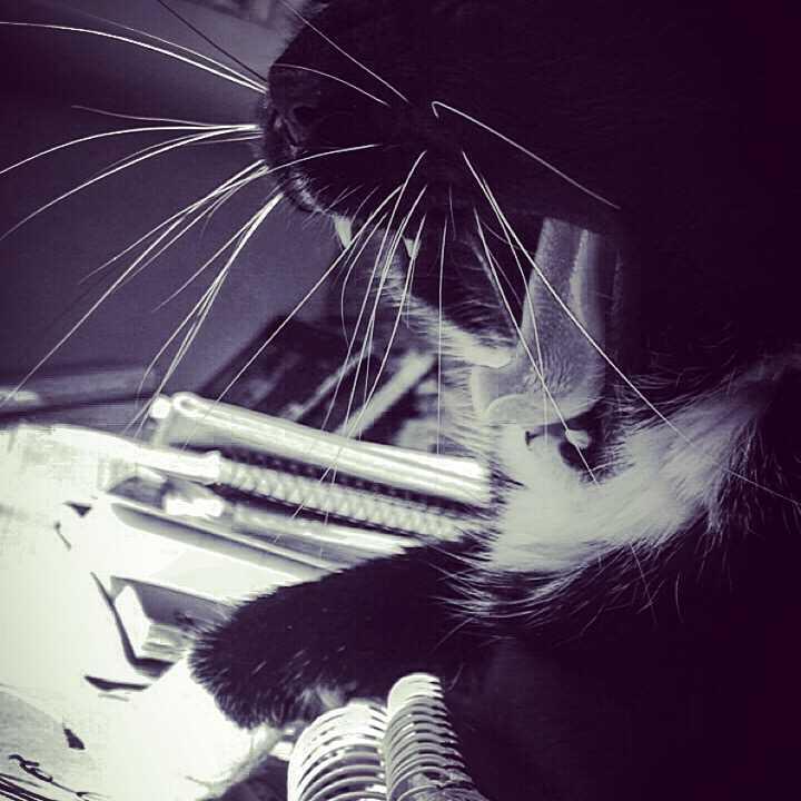 Zdjęcie mojego kocura Wełniaka.